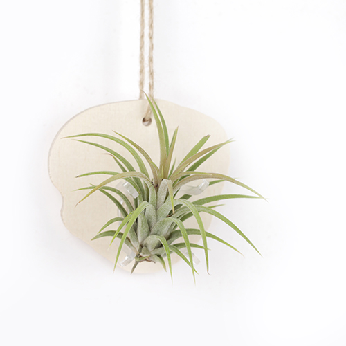Wood Wall Ionantha SET